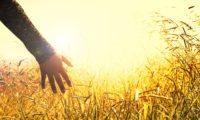 hands-2667461_1920